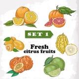 Reeks 1 Verse citrusvruchten van sinaasappel, grapefruit, sukade, kalk, bittere sinaasappel en kumquat Royalty-vrije Stock Afbeeldingen