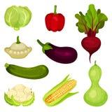 Reeks verse groenten Gezond voedsel Natuurlijke landbouwproducten Ingrediënten voor Salade Grafische elementen voor promoaffiche stock illustratie