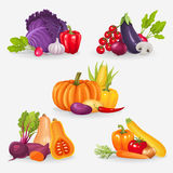 Reeks verse groenten Gezonde voedsel vectorillustratie Stock Afbeelding