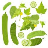 Reeks verse komkommers Stock Fotografie