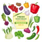 Reeks verse, rijpe, heerlijke groenten voor uw ontwerp Kleurrijke inzameling van geïsoleerd vegetarisch voedsel van de tuin Royalty-vrije Stock Afbeeldingen
