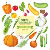 Reeks verse, rijpe, heerlijke groenten voor uw ontwerp Kleurrijke inzameling van geïsoleerd vegetarisch voedsel van de tuin Stock Foto's
