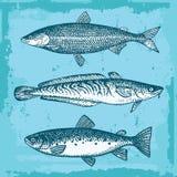Reeks Vissen Stock Afbeelding