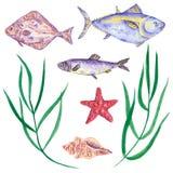 Reeks vissen, zalm, heilbot en haringen met zeester, shell en zeewier royalty-vrije stock afbeeldingen