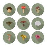 Reeks vlakke pictogrammenpaddestoelen Stock Foto's
