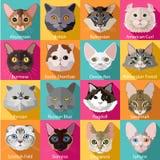 Reeks vlakke populaire rassen van kattenpictogrammen Royalty-vrije Stock Foto's