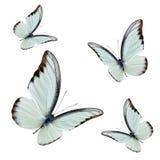 Reeks vliegende mooie buterflies met volledig vleugel die over vegen stock afbeelding