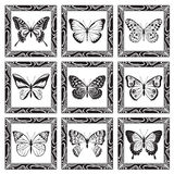 Reeks vlinders Royalty-vrije Stock Afbeelding