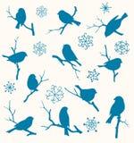Reeks vogels Royalty-vrije Stock Afbeeldingen
