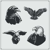 Reeks vogels Raven en adelaars vector illustratie