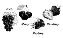Reeks vruchten en bessen, die op witte achtergrond wordt geïsoleerd Hand-drawn elementen zoals druif, kers, aardbei en royalty-vrije illustratie