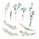 Reeks waterverf blauwe bloemen en bladeren op witte achtergrond Stock Foto