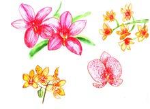 Reeks waterverfbloemen Orchidee royalty-vrije illustratie