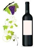 Reeks wijnstokelementen Royalty-vrije Stock Afbeelding