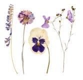 Reeks wilde droge gedrukte bloemen en bladeren Stock Foto's