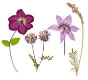 Reeks wilde droge gedrukte bloemen en bladeren Royalty-vrije Stock Fotografie