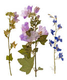 Reeks wilde droge gedrukte bloemen en bladeren Stock Afbeelding