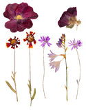 Reeks wilde droge gedrukte bloemen en bladeren Stock Fotografie