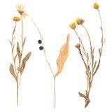 Reeks wilde droge gedrukte bloemen en bladeren Royalty-vrije Stock Foto's