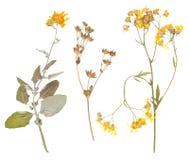Reeks wilde droge gedrukte bloemen en bladeren royalty-vrije stock afbeelding