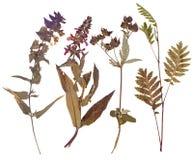 Reeks wilde gedrukte bloemen Royalty-vrije Stock Afbeeldingen