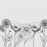 Reeks wilde, zwart-witte gebiedsbloemen - de papaver, kamille, korenbloem, madeliefje, schetst vectorillustratie royalty-vrije illustratie