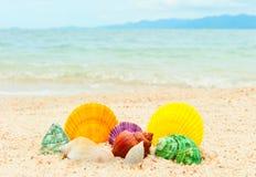 Reeks zeeschelpen op het overzeese strand Royalty-vrije Stock Afbeelding
