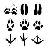 Reeks Zoogdieren en bodvoetafdrukken - Vectorillustratie vector illustratie