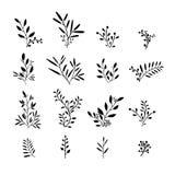 Reeks zwart-wit installatieelementen Boeketten, uitrustingen Stock Afbeelding