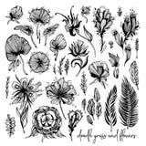Reeks zwart-witte exotische bloemen, krabbelelementen Vectorillustratie, Groot ontwerpelement voor gelukwens Stock Fotografie