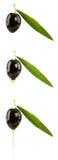 Reeks zwarte olijven met olijfoliedalingen Stock Foto
