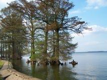 reelfoot озера стоковая фотография rf