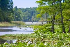 Reelfoot全国野生生物保护区 库存图片