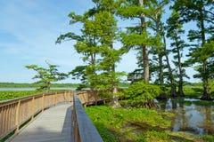 Reelfoot jezioro Obrazy Royalty Free