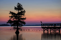 Reelfoot Lake Tennessee State Park. A Snowy egret silhouetted in the predawn glow from one of the many fishing piers at Tennessee's Reelfoot Lake State Park. A Royalty Free Stock Image