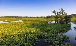 Reelfoot Lake Stock Photography