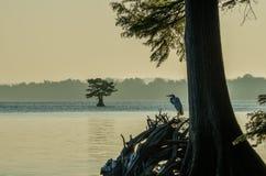 Reelfootmeer, Tennessee State Park Royalty-vrije Stock Foto's
