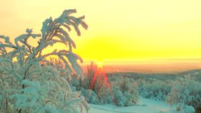 The reeling snow-covered tree branches on the background  the winter dawn and the sun. stock video