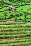 Reen rice field terrace Stock Photos