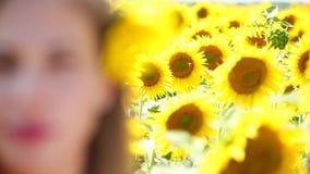 Reenfoque con mitad del retrato de la muchacha en los girasoles La mujer come las semillas de girasol almacen de metraje de vídeo