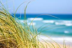 Reet trawy chodzenie w wiatrze z oceanem, plażą i fala w tle przy ostrygi zatoką, Południowa Afryka Fotografia Stock