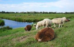 Reeuwijkse Plassen naturområde, Nederländerna fotografering för bildbyråer