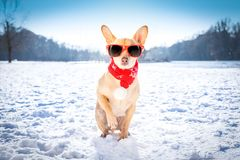 Reezing icy dog in snow. Cool funny freezing icy dog in snow with sunglasses and scarf, sitting and waiting to go for a walk with owner royalty free stock image