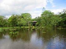 Refúgio selvagem Costa Rica da vida do negro de Caño fotos de stock royalty free