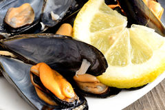 Ref mussels with lemon Stock Photos
