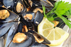Ref mussels with lemon Royalty Free Stock Photo