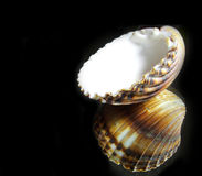 Refected shell Stock Images