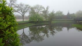 Refecting damm med träd på en dimmig morgon Arkivfoton