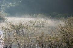 Refection острова и кустарников соснового леса на озере на зоре с волшебством неба и части 13 облаков стоковые фотографии rf