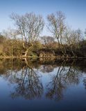 Refection in pond of trees framing walker in Winter Royalty Free Stock Photo